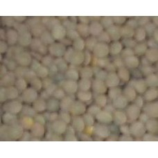 Green Lentils Small 2 Lbs